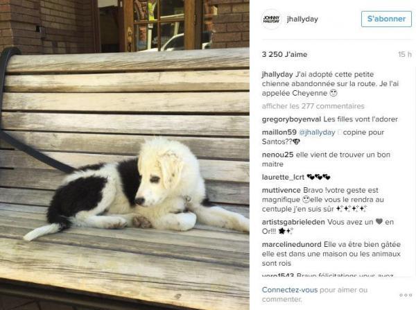 Johnny Hallyday sauve un chien abandonné