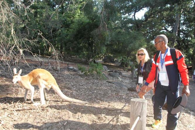 Une petite virée au zoo de Perth où les kangourous étaient en semi-liberté