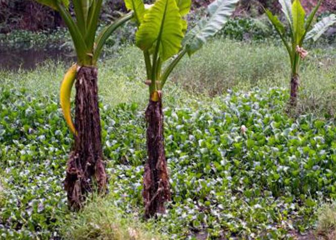 Madagascar : la photo de tous les dangers