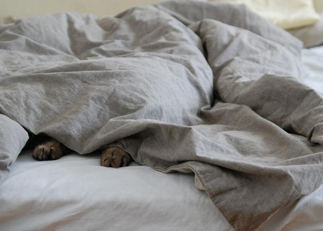 Matelas, couettes et oreillers accumulent des cellules de peau humaine qui sont propices au développement des acariens de la poussière. C'est un terrain chaud et humide du lit dont ils raffolent. Environ 10 millions d'acariens sont recensés dans un lit, en moyenne. Sans oublier les microbes et bactéries qui peuvent se retrouver dans les draps.