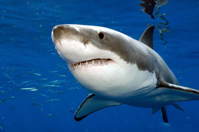 Elle ride avec un grand requin blanc! Son copain filme la scène...