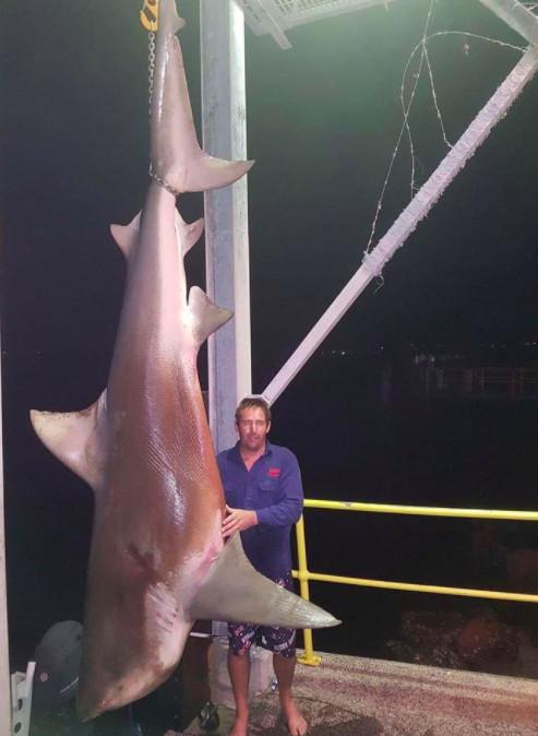 La pêche d'un énorme requin bouledogue fait polémique