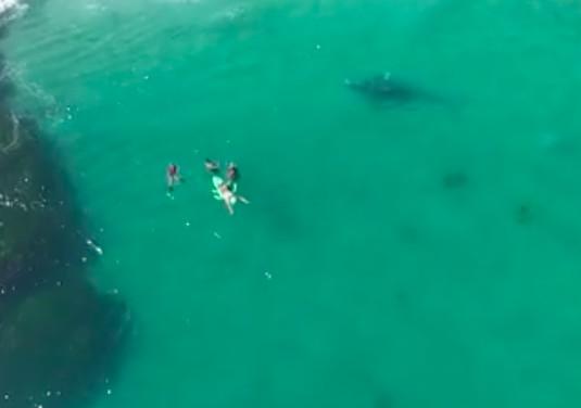[VIDEO] A trois mètres de la baleine, les nageurs ne la voient pas
