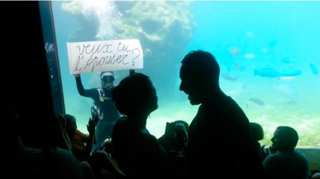 Une incroyable demande en mariage à Kélonia