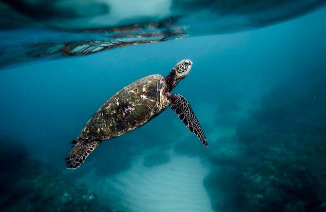 Madagascar: Huit enfants meurent après avoir mangé de la tortue marine