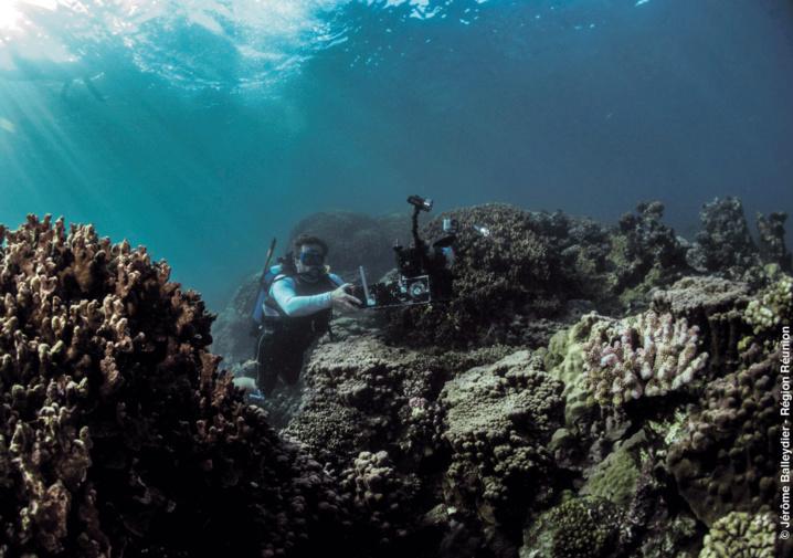 Récif Corallien en 3D