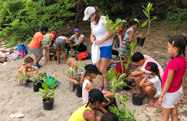 Venez participer aux ateliers de plantation sur les plages de pontes de tortues marines
