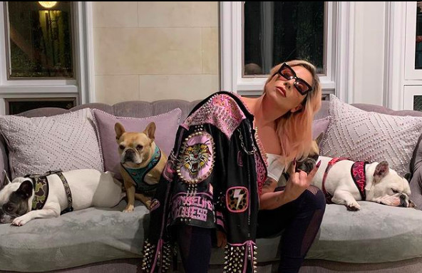Lady Gaga offre 500 000$ pour récupérer ses chiens kidnappés