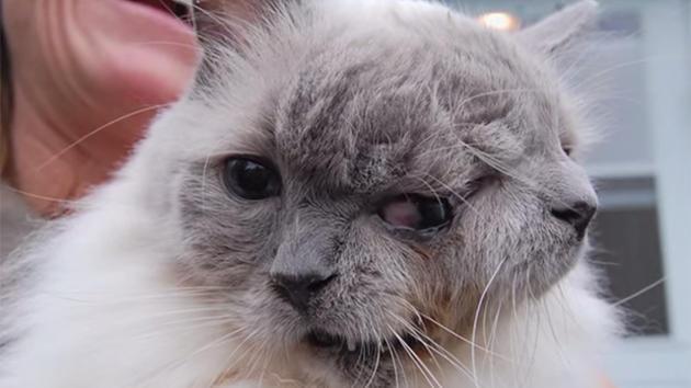 Mort du plus vieux chat à deux têtes