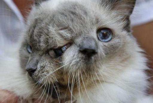 Frank and Louie est née avec deux bouches, deux nez, trois yeux bleus mais un seul cerveau.