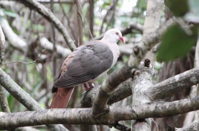 Il suffit de lever la tête et/ou de regarder dans les arbres pour découvrir les oiseaux