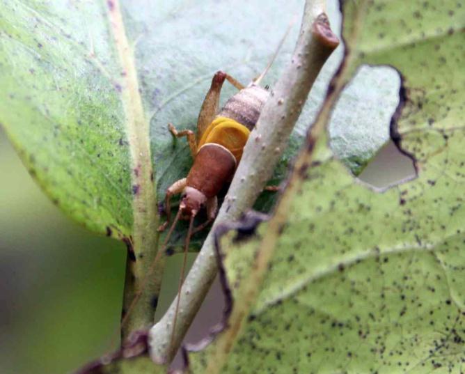 Des insectes partout. Il suffit d'ouvrir l'œil…