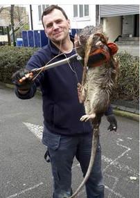 Mytho ou héros? <br> Un rat de 1,20m!