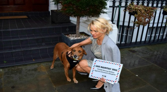Alerte à Mauritius! Pamela Anderson bouleversée par des vidéos-chocs