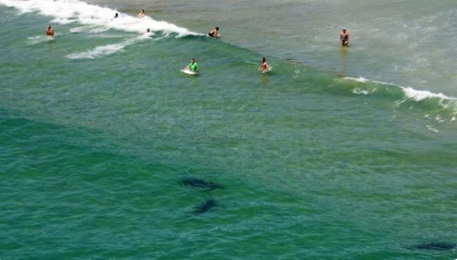 Photo d'illustration : En Australie, les drones sont déjà largement utilisés pour surveiller les plages à risques