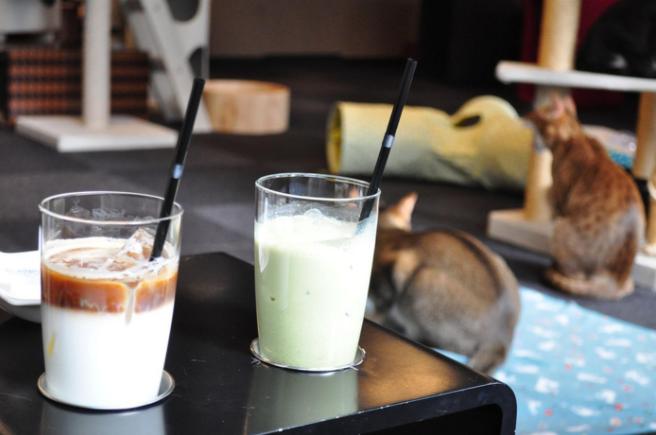 """""""Matouccino Cat Café"""", le premier bar à chats de La Réunion"""