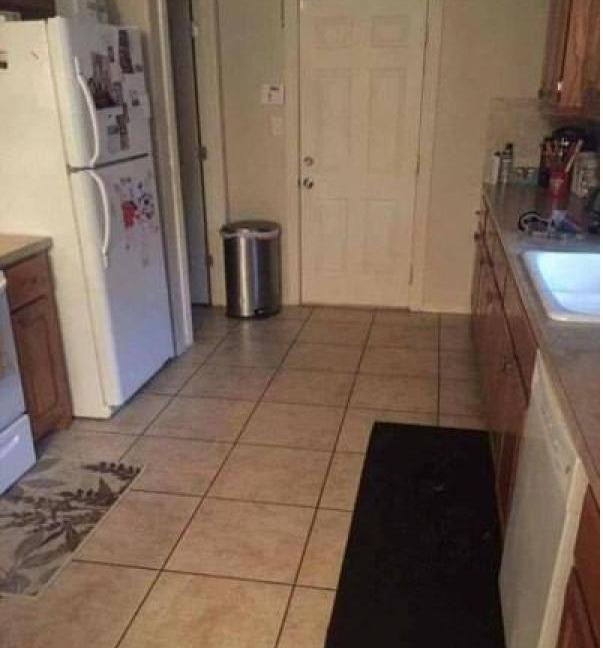 Où est le chien?