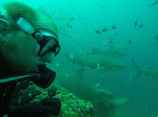 Plongée avec des requins bouledogues sans cage aux Fidji