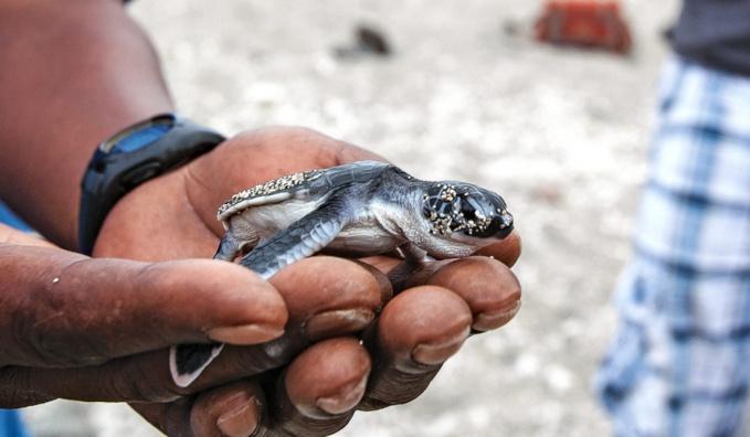 Des plages pour nos tortues
