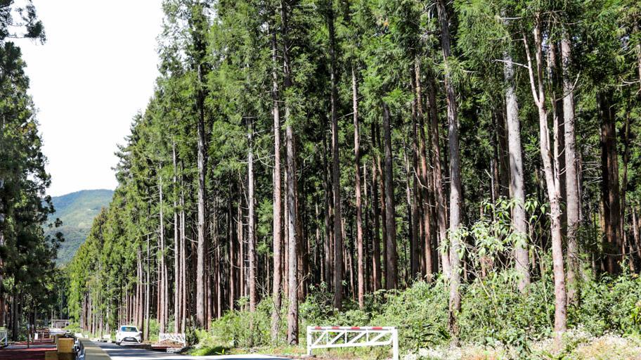 Participation du public à l'élaboration du programme régional de la forêt et du bois (PRFB) de La Réunion