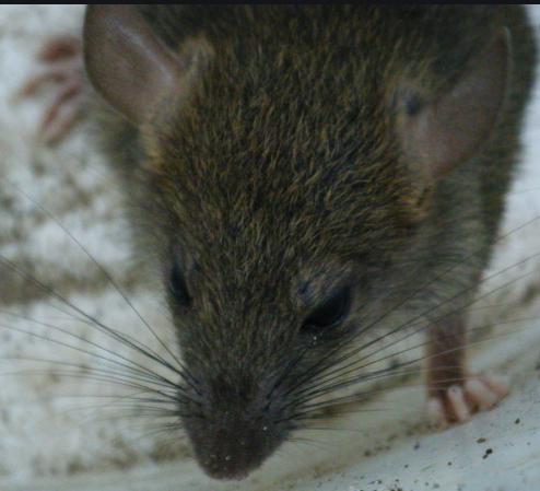 Il laisse les rats dévorer le corps de sa petite fille trisomique