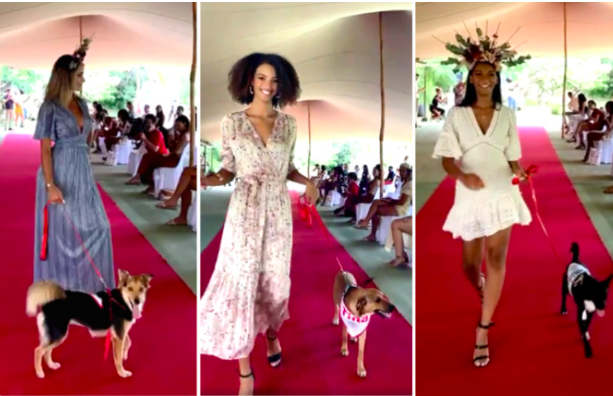 Captures d'écran vidéo Facebook Fashion Dogs 2021