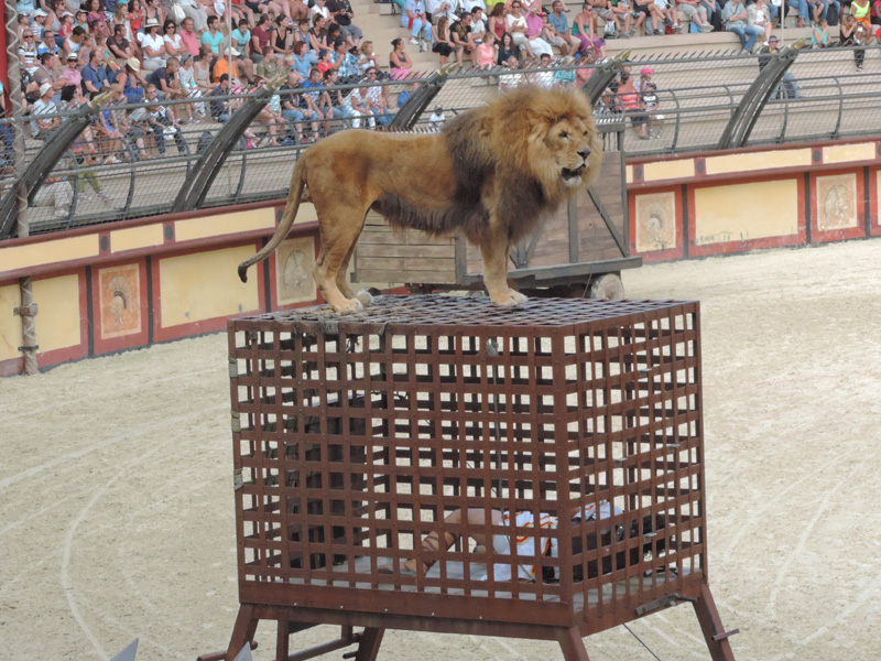 Il y a même un lion...