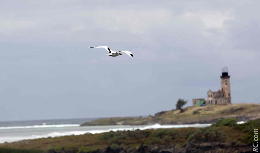 Le vol majestueux d'un paille-en-queue vers une île au Phare fantomatique…