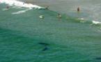 Un drone a filmé l'attaque d'Alexandre par un requin dans l'embouchure de la rivière du Mat