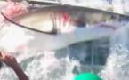 Un grand requin blanc dans la cage d'un plongeur
