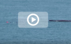 Trois nageurs font fuir une baleine et son baleineau