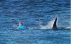 Attaque de requin en pleine compétition de surf