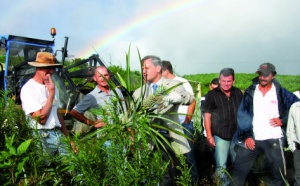 Le Préfet chez les planteurs de «z'ananas»
