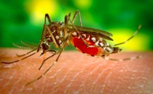Et si la dengue était sexuellement transmissible?
