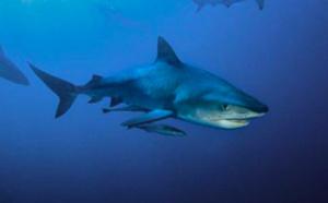 Mordu au bras par un requin, un Australien parvient à nager jusqu'au rivage