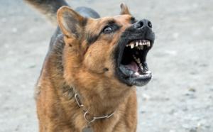 Mort d'Elisa Pilarski: l'étau se resserrait autour de son chien...