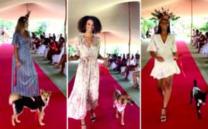 Un défilé qui a du chien : la Fashion dogs de la SPA du Sud