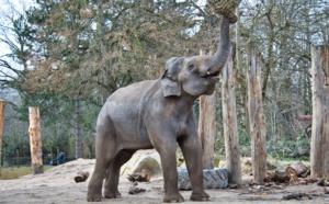 Il risque la vie de son enfant pour un selfie avec des éléphants