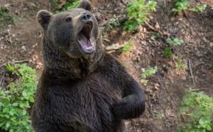 Elle retrouve un ours dans son jardin!