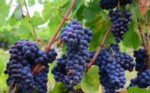 Intoxiqués en produisant du vin : quatre décès dans une même famille