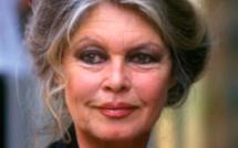 Brigitte Bardot défend le chien présumé coupable de la mort d'une jeune femme enceinte